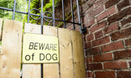 Can a Dog Protect Your Home?